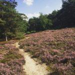 omgeving norg huisje huren heide in oerbos
